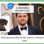 Microsoft Fetch App Compares Your Faces With a Dog's –